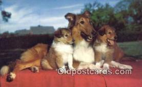 dog100678 - Collie Dog Post Card Postcard Old Vintage Antique