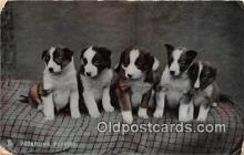dog100696 - Promising Puppies  Postcard Post Card