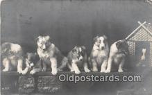 dog100698 - Real Photo  Postcard Post Card