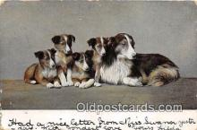 dog100699 - Postcard Post Card