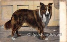 dog100701 - Collie Postcard Post Card