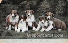 dog100703 - Postcard Post Card