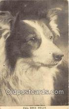 dog100710 - Full Bred Collie  Postcard Post Card