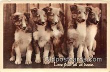 dog100714 - Workins Dos  Postcard Post Card