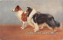 dog100716 - Postcard Post Card