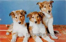 dog100718 - Three important Guys Western Resort Publications Postcard Post Card