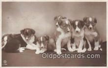 dog100721 - Postcard Post Card