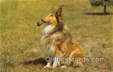 dog100725 - Color Photo By John V Pontiere, Jr Postcard Post Card