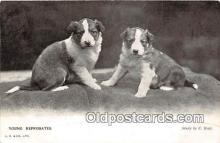 dog100726 - Young Reprobates Study by C Reid Postcard Post Card