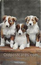 dog100731 - Collie Puppies  Postcard Post Card