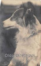 dog100740 - Postcard Post Card