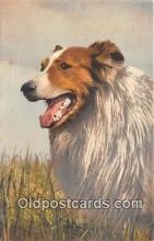 dog100741 - Collie  Postcard Post Card