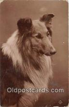 dog100746 - Postcard Post Card