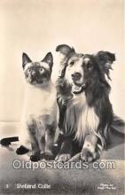 dog100747 - Shetland Collie Photo By Hugh Morton Postcard Post Card