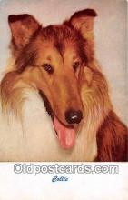 dog100758 - Collie  Postcard Post Card