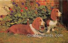 dog200033 - Basset Hounds  Postcard Post Card