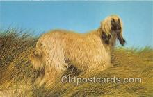 dog200037 - Afghan Hound  Postcard Post Card