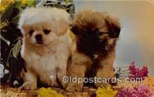 dog200062 - Mixed Doubles Color by Mike Roberts, Berkeley, CA, USA Postcard Post Card