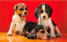 dog200066 - Beagle Pups Color by Mike Roberts, Berkeley, CA, USA Postcard Post Card