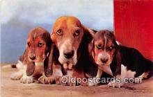 dog200067 - Basset Hounds Alfred Mainzer, Inc Postcard Post Card