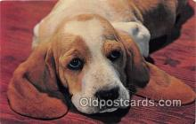dog200069 - Color by Free Lance Photographers Guild, Inc Postcard Post Card