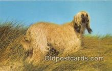 dog200070 - Afghan Hound Salmon Watercolour Postcard Post Card