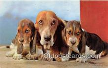 dog200072 - Basset Hounds Alfred Mainzer, Inc Postcard Post Card