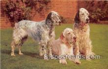 dog200091 - English Setters Salmon Watercolour Postcard Post Card