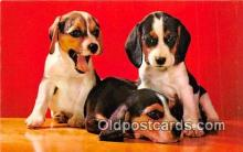dog200092 - Beagle Pups Color by Mike Roberts, Berkeley, CA, USA Postcard Post Card