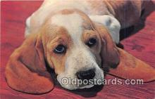 dog200093 - Color by Free Lance Photographers Guild, Inc Postcard Post Card