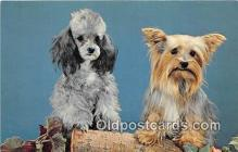 dog200094 - Playmates Color by John Gajda Postcard Post Card