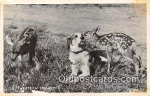 dog200096 - Western Friendship  Postcard Post Card