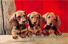 dog200100 - Dachshund Pups Alfred Mainzer, Inc Postcard Post Card