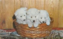 dog200106 - Samoyed, Mrs Pivirotto North Dorset, Vermont, USA Postcard Post Card