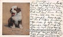 dog200120 - Born Tired Hood's Sarsaparilla Postcard Post Card