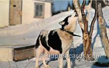 dog200121 - Howling Husky Sculpture Paper Products, NY, USA Postcard Post Card