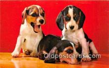 dog200123 - Beagle Pups Color by Mike Roberts, Berkeley, CA, USA Postcard Post Card