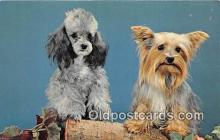 dog200124 - Playmates Color by John Gajda Postcard Post Card