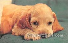 dog200126 - Color by Free Lance Photographers Guild, Inc Postcard Post Card