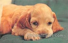 dog200129 - Color by Free Lance Photographers Guild, Inc Postcard Post Card