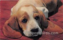 dog200130 - Color by Free Lance Photographers Guild, Inc Postcard Post Card