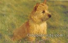 dog200134 - Norwich Terrier Salmon Watercolour Postcard Post Card