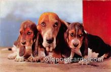 dog200141 - Basset Hounds Alfred Mainzer, Inc Postcard Post Card
