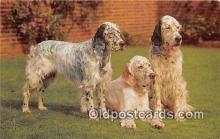 dog200142 - English Setters Salmon Watercolour Postcard Post Card