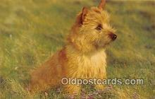 dog200147 - Norwich Terrier Salmon Watercolour Postcard Post Card