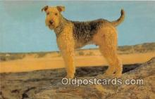 dog200175 - Airedale Salmon Watercolour Postcard Post Card