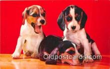 dog200178 - Beagle Pups Natural Color K Card Postcard Post Card