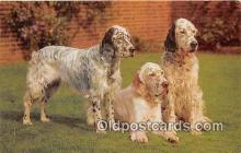 dog200180 - English Setters Salmon Watercolour Postcard Post Card