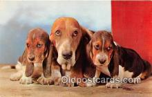 dog200184 - Basset Hounds Alfred Mainzer, Inc Postcard Post Card