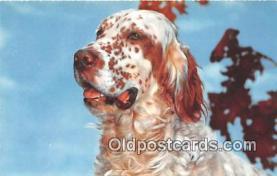 dog200191 - Postcard Post Card